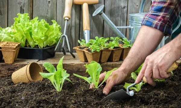 Comment construire unparterresurélevé pourle jardinage