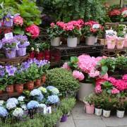 Astuces de pro pour éviter des erreurs de jardinage de base