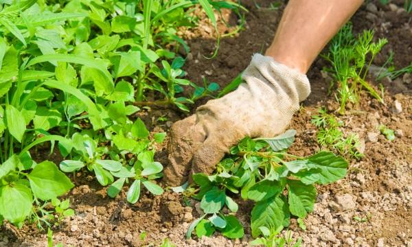 5 solutions non toxiques contre les mauvaises herbes