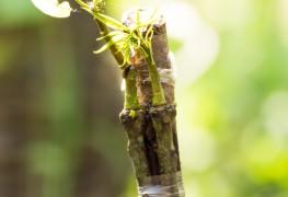 Techniques et bienfaits des greffes d'arbres
