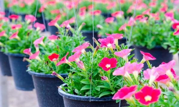 3 conseils pourcommencer et entretenir un jardin en pot