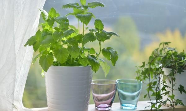 5 trucs faciles pour nettoyer vos plantes d'intérieur