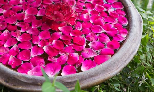 4 éléments clés à prendre en compte avant d'installer un bassin dans son jardin