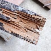 Comment se débarrasser des termites
