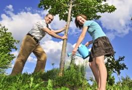 Quelle est la règlementation pour la plantation d'arbres?