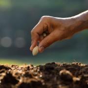 Comment planter un arbre