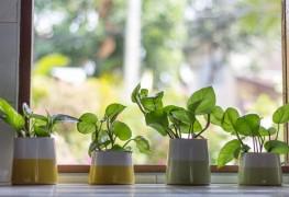 5 désodorisants et purificateurs d'air naturels