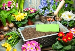 7 astuces de jardinage peu coûteuses