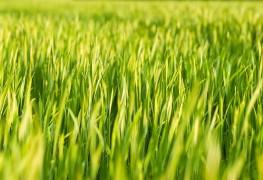 Envie de vert: créer une pelouse sans entretien