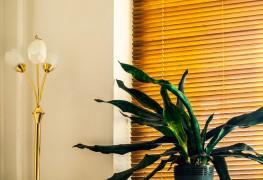 La salle de séjour n'est pas toujours la pièce la plus saine de la maison: chauffage, télévision, émanations provenant du mobilier et des installations sont autant de sources de problèmes. Voici comment être confortable de façon plus naturelle.