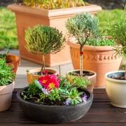 Comment embellir samaison grâce aux plantes en conteneur