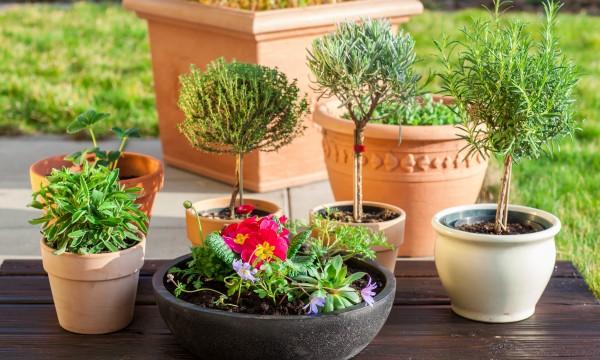 comment embellir sa maison gr ce aux plantes en conteneur trucs pratiques. Black Bedroom Furniture Sets. Home Design Ideas