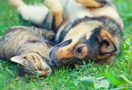 8 conseils pour préparer des collations sainespour chiens et chats