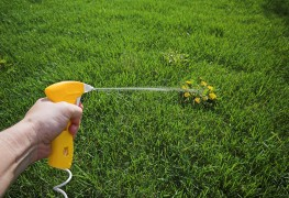Herbicides et insecticides: comment choisir?