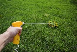 2 notions pour débarrasser votre jardin des mauvaises herbes