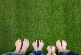 Recommandationspour faire pousser une pelouse facilement