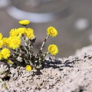 6 procédés pour améliorer l'irrigation d'un sol sableux