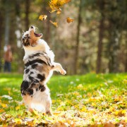 4 façons de se mettre en forme avec son animal de compagnie