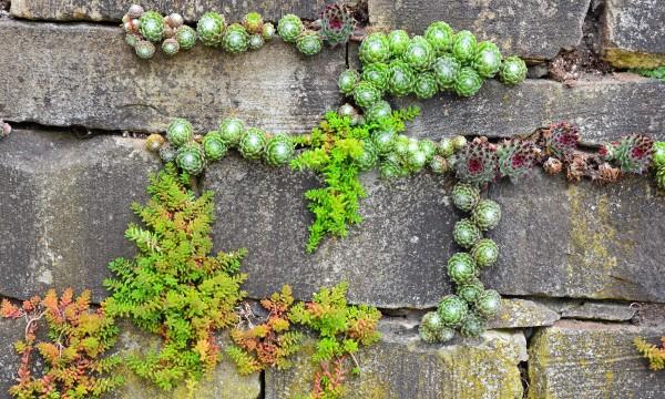 4 idées ingénieuses pour cultiver un jardin sur un mur