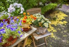4 idées pour utiliser des plantes en pot pour décorer votre espace extérieur