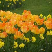 4 raisons d'ajouter des bulbes de fleur dans votre jardin