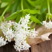 6 plantes à fleurs éclatantes pour les jardins d'ombre