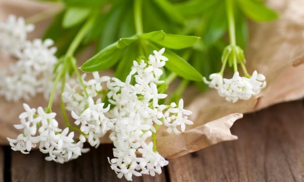 6 plantes fleurs clatantes pour les jardins d 39 ombre trucs pratiques. Black Bedroom Furniture Sets. Home Design Ideas