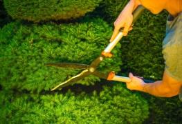 18 façons de traiter les ravageurs et les maladies sur des arbustes