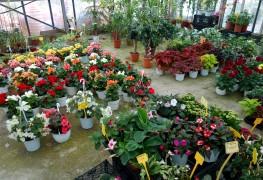 5 conseils pour acheter et planter des plantes en santé