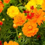 Apprenez les rudiments de plantation d'un jardinpluvial