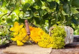 Le millepertuis : ce que cette plante peut faire pour vous