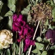3erreurs de jardinage courantes et comment les éviter