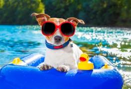 5 conseils pour simplifier vos vacances avec vos animaux de compagnie