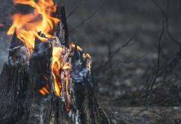 5 méthodes pour protégervotre maison des feux de forêt