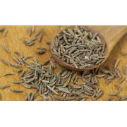 9 infos pratiques à savoir sur le carvi, une plante médicinale et aromatique