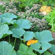 Concevez votre jardin judicieusement : soleil et climat