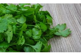 9 infos utiles à connaitre sur la coriandre, une plante aromatique et médicinale