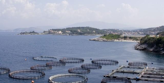 Rudiments et bases d'une ferme piscicole