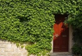 Moyens astucieux pour palisserles plantes grimpantes et cultiver les vignes