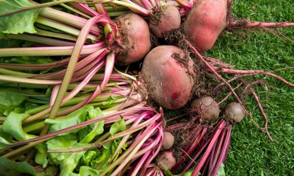 5 légumes à cultiverdans votre jardin par temps frais