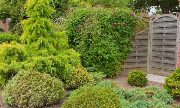6 conseils pour entretenir vos arbustes