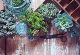 5 conseils pour rempoter une plante d'intérieur