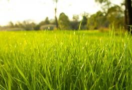 5 secrets pour une pelouse dense et luxuriante
