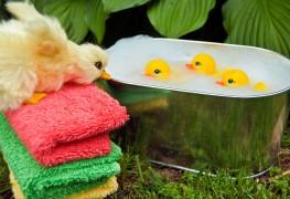 Conseils pour donner le bain à votre bébé
