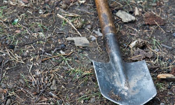 Comment préparer un trou pour les arbres et arbustes