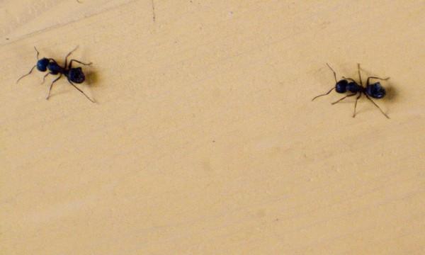 Quoi savoir sur les parasites domestiques les plus courants