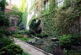 Les 5 meilleurs endroits oùplanter des fougères dans votre jardin