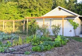 6 conseils importants pour transformer votre jardin avec des treillis