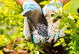 6 conseils clés pour fertiliser votre jardin avec de l'azote