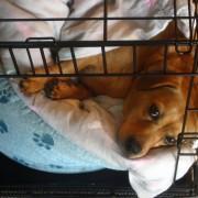 Comment choisir la bonne cage pour votre chien
